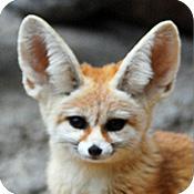 paper origami fennec fox